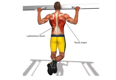 pull up muscles worked diagram