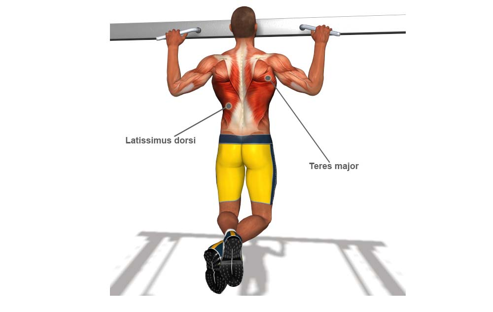 Pull Up Muscles Worked With Diagram